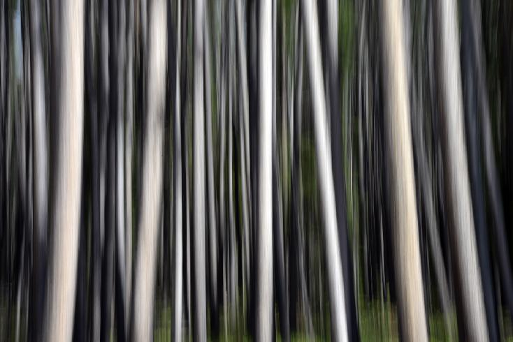 Sierra Madre Aspens | Abstract by Bo Cheatham