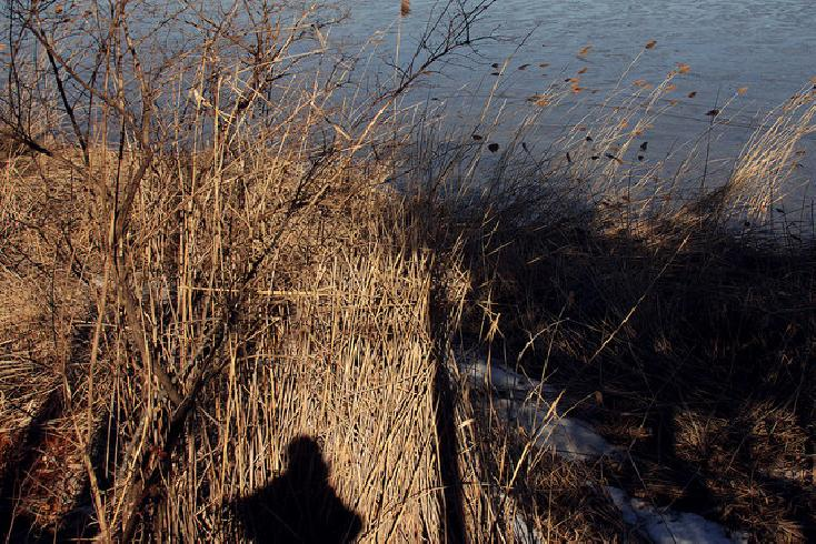 Self portrait, Presumpscot RIver Estuary, Falmouth, ME by Mark Barnette