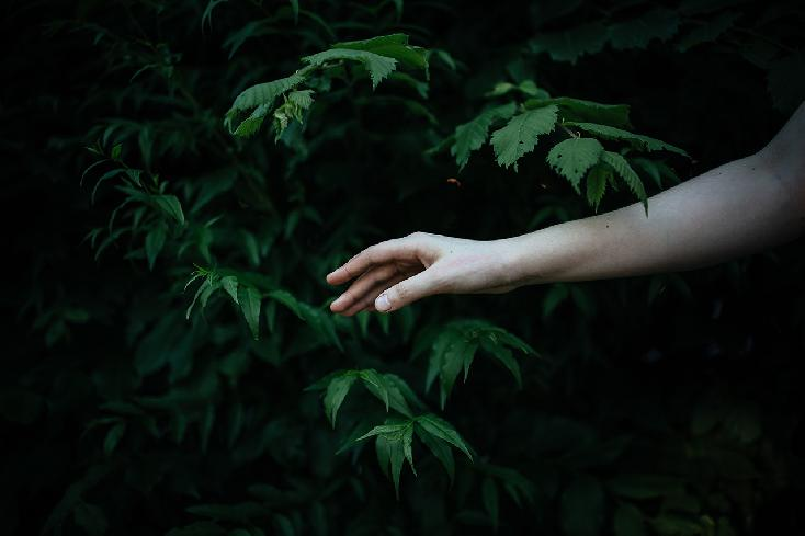 Hand in Leaves by Stephanie Facer