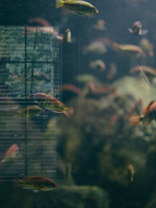Fish by Stephanie Facer