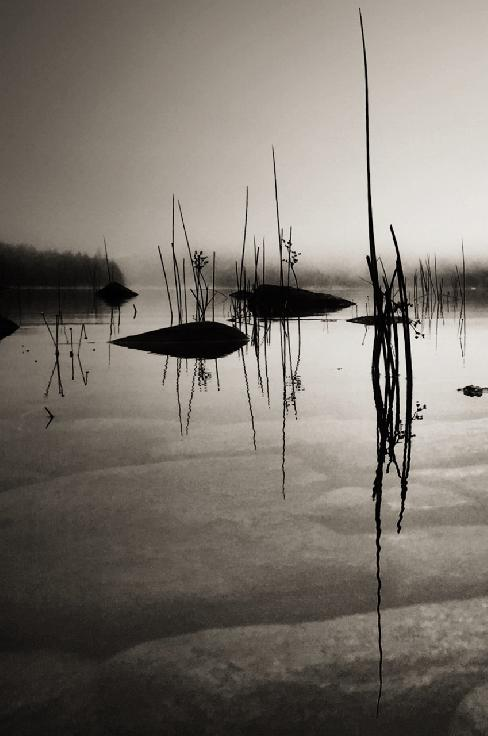 Reeds by Gabrielle Robinson