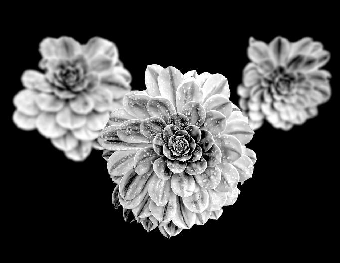Succulent #1 - 2012 ©Richard Greene by Richard Greene
