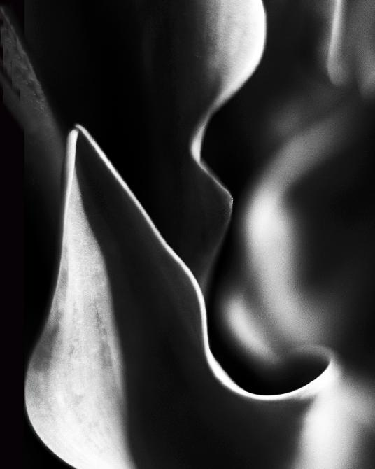 Curves and Shadows by Diane Kaye