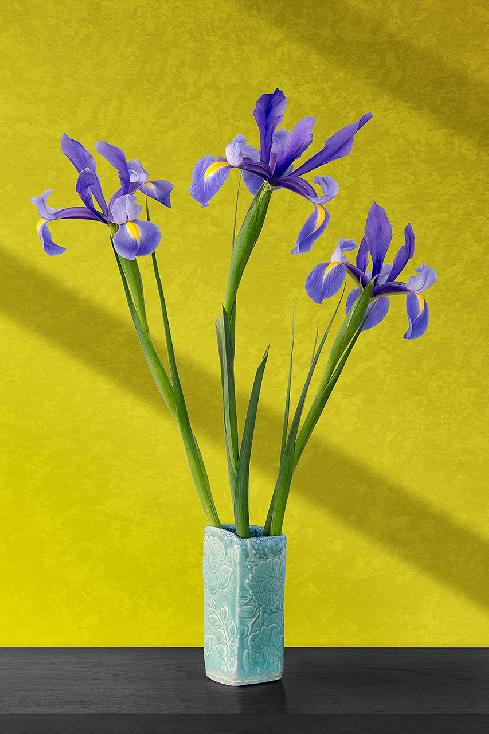 Roberts Irises by Jim Turner