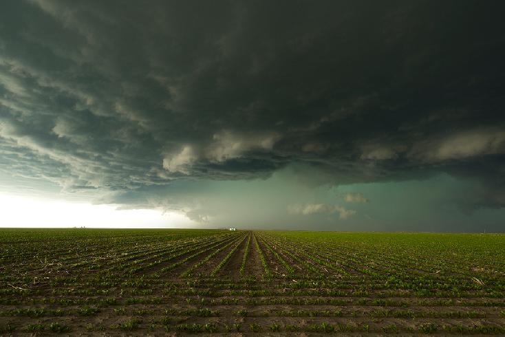 Young Crops Under Storm Clouds by KEN TREVOR
