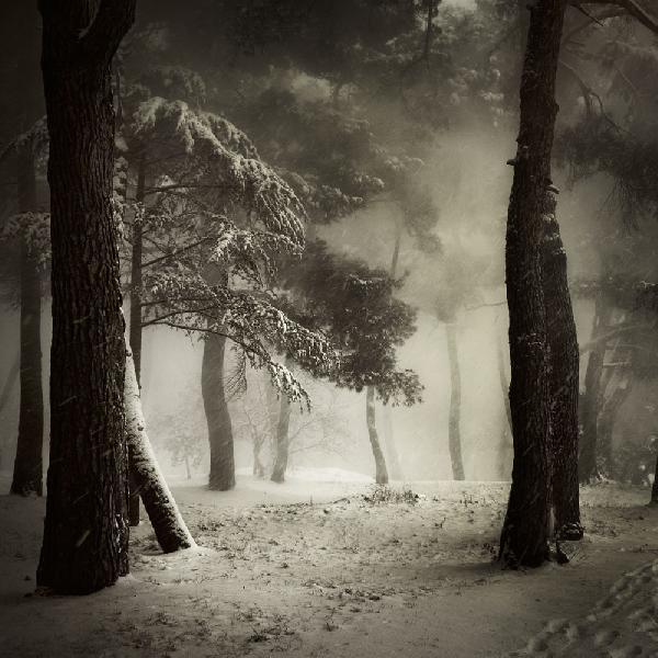 """Among Trees"" Juror's Choice: ""Ballad from a wood4"" by Karmen Orlic from Porec, Croatia"